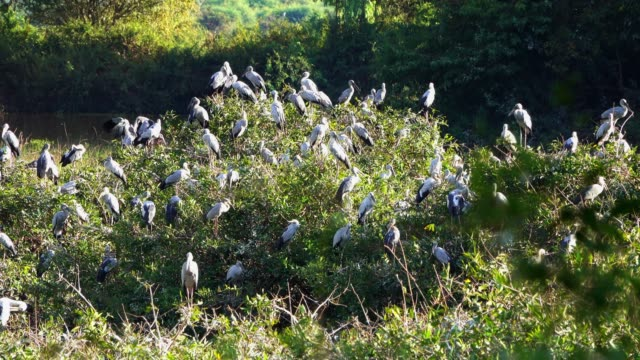 great egret meeting place - great egret stock videos and b-roll footage