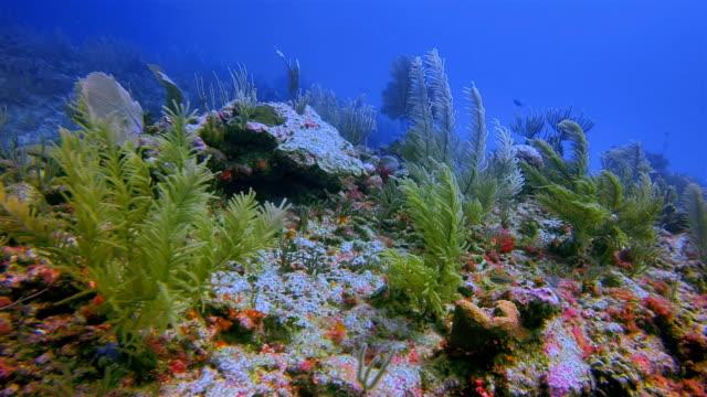 great maya reef scuba diving in caribbean sea near akumal bay - riviera maya / cozumel , quintana roo , mexico - akumal stock videos and b-roll footage