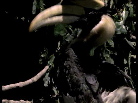 Exokrine Drüse Videos und B-Roll-Filmmaterial | Getty Images