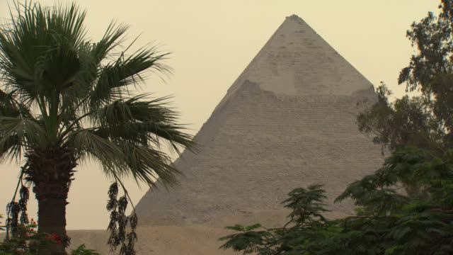 Great Pyramid of Giza with palm in foreground