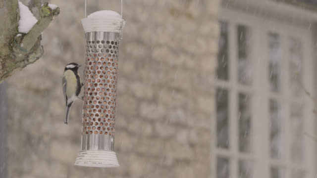 "stockvideo's en b-roll-footage met great tit (parus major) feeds from bird feeder as snow falls, oxfordshire, england - ""bbc natural history"""