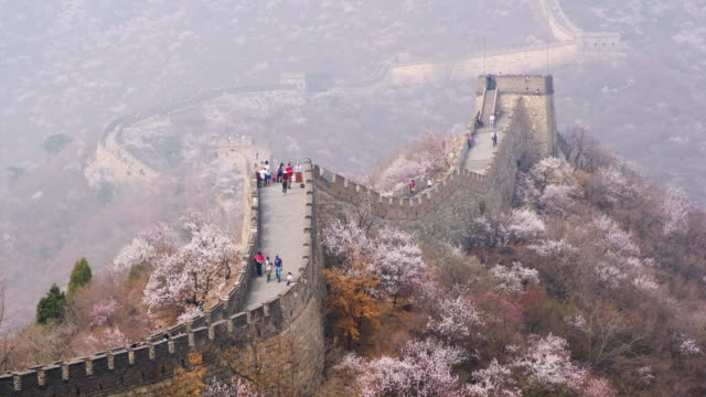 great wall of china with sakura flower in spring season - great wall of china stock videos & royalty-free footage