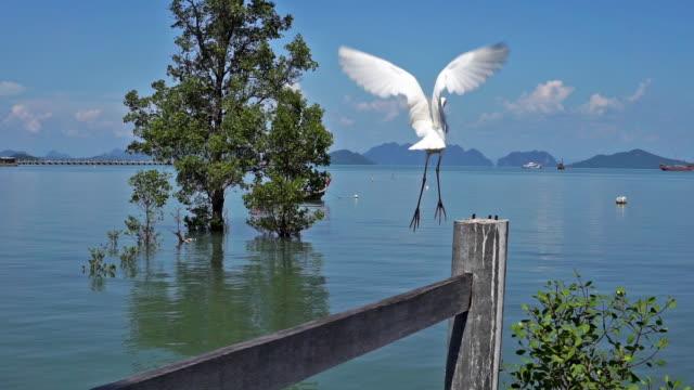 great white egret heron (ardea alba) bird in flight - heron stock videos & royalty-free footage
