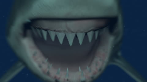 great white shark attaching the camera - violence stock videos & royalty-free footage