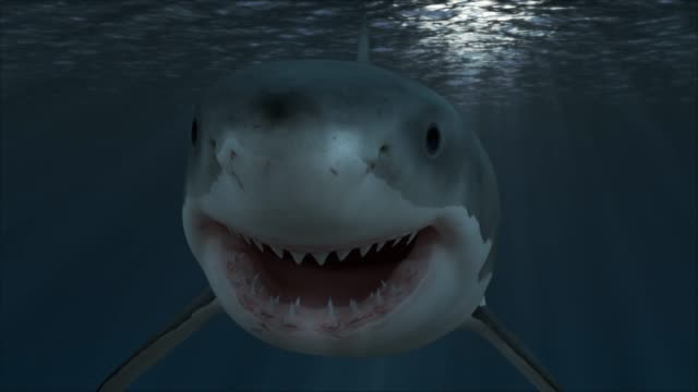 vídeos de stock e filmes b-roll de great white shark attack - animal body part