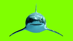 Great White Shark Megalodon on a green background