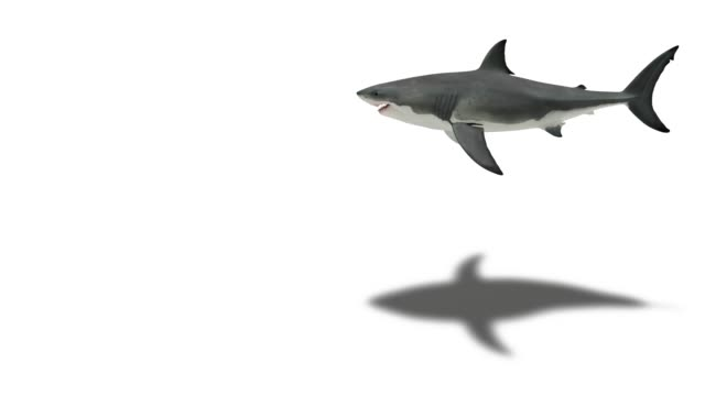 great white shark on white with shadow - plain background stock videos & royalty-free footage