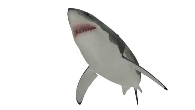der weiße hai schwimmen auf weißen endlos wiederholbar - endlos film stock-videos und b-roll-filmmaterial
