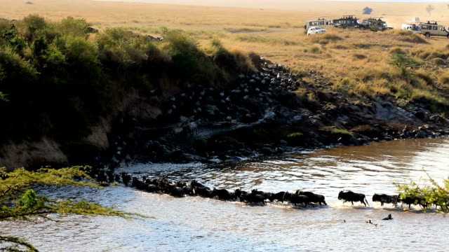 素晴らしいヌー移行のケニア