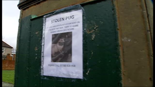 vídeos de stock e filmes b-roll de plumstead: poster appealing for return of stolen pug reporter to camera dingley with pet pug - emprego na comunicação social