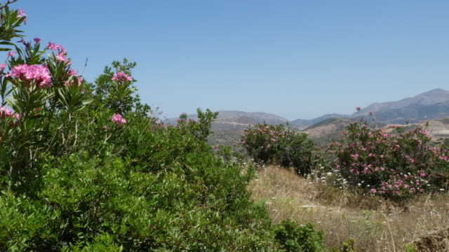 Greece Crete landscape with oleander