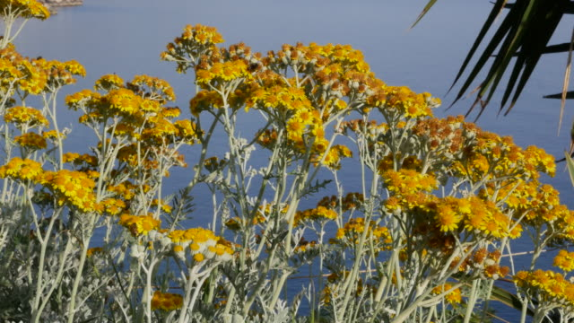greece crete yellow flowers with flying insects - wide shot stock videos & royalty-free footage