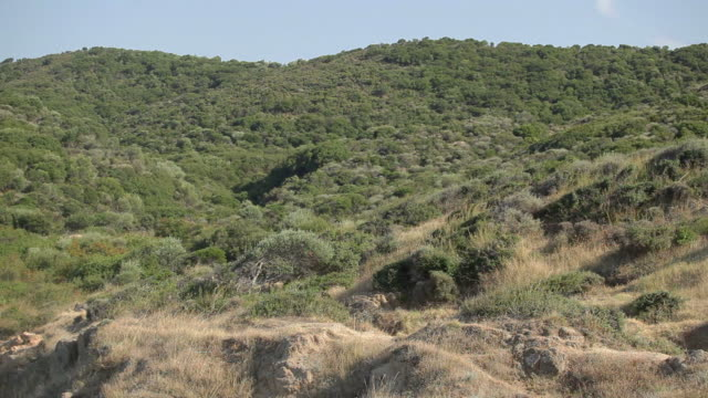 Greece hill vegetation