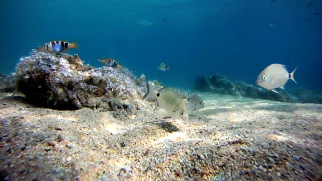 greedy 魚のお - 海藻点の映像素材/bロール