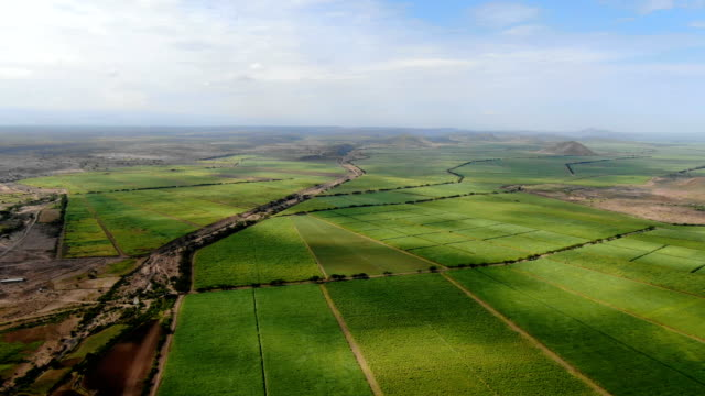 Green Agricultural fields in the rift valley of Ethiopia, Africa