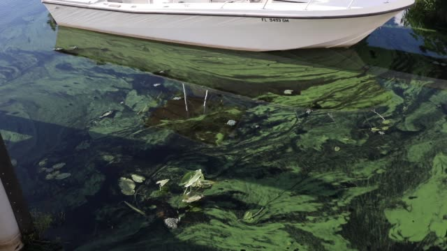 green algae blooms that come mostly from the controlled discharges of water from lake okeechobee are seen next to a boat along the caloosahatchee... - florida us state stock videos and b-roll footage