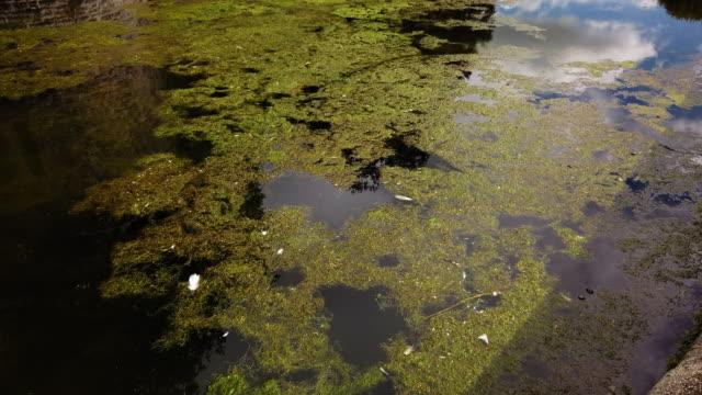 green algae - pond stock videos & royalty-free footage