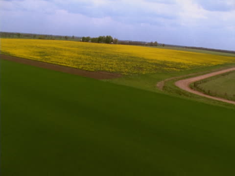 Green and yellow farmlands