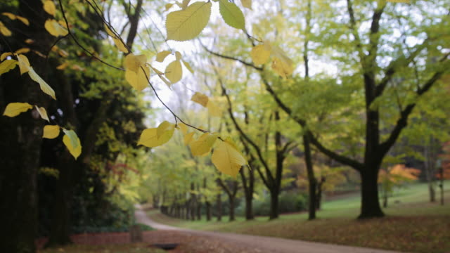 Green and yellow footpath in autumn, Mount Macedon, Victoria, Australia