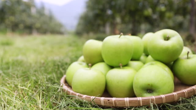 CU POV R/F Green apples on grass / Andong, Gyeongsangbuk do, South Korea