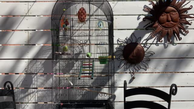 grüner vogel im käfig - tier in gefangenschaft stock-videos und b-roll-filmmaterial