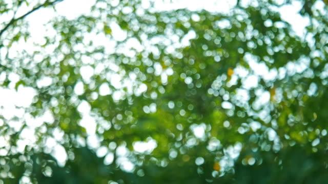 green bokeh or de focused leaf background. - soft focus stock videos & royalty-free footage