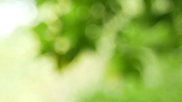 green bokeh or de focused leaf background. - soft focus stock videos & royalty-free footage