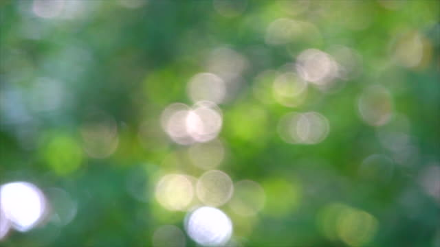 green bokeh or focused leaf background. - brightly lit video stock e b–roll