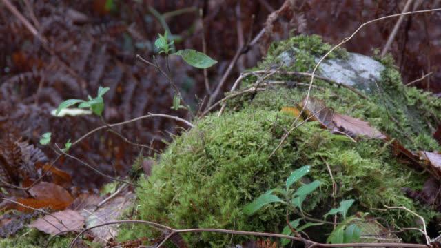 Grüne Bracken und toten Blätter im feuchten schottischen Wald