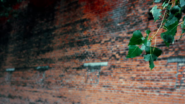 Green branch on Red brick wall background