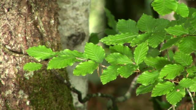HD: Green branch