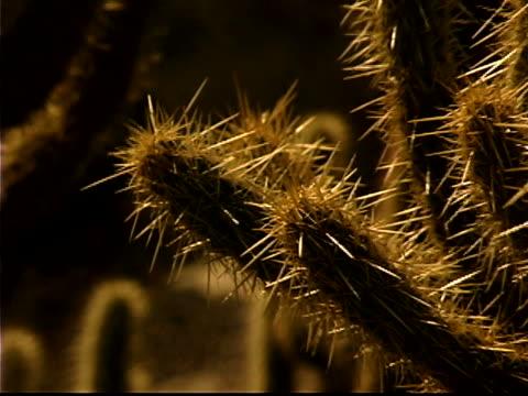 green cactus - einige gegenstände mittelgroße ansammlung stock-videos und b-roll-filmmaterial