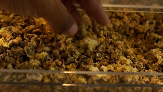 green chrysanthemum - chrysanthemum stock videos & royalty-free footage