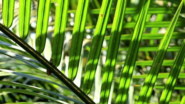 Green Coconut Leaf Weaving in Sun Light.