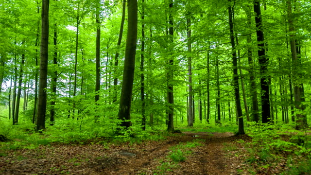 crane up: green deciduous forest - deciduous stock videos & royalty-free footage