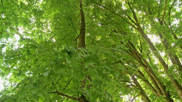 hd crane: green deciduous trees - crane shot stock videos & royalty-free footage