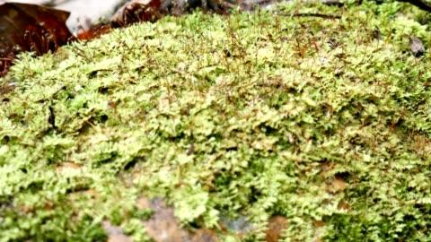 自然の中の緑のシダ苔。 - 葉状体点の映像素材/bロール