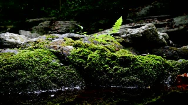 自然の中の緑のシダ苔。 - 地衣類点の映像素材/bロール