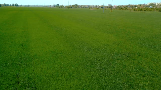 Green field. Aerial shooting