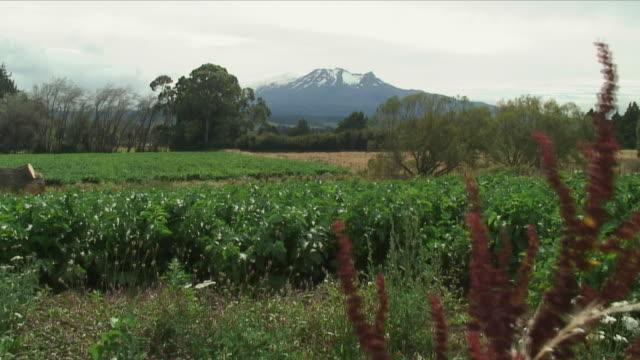 ws green field against snowy mountain / tongariro, new zealand - new zealand stock-videos und b-roll-filmmaterial