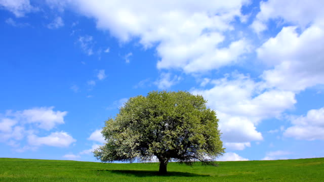hd green field and lonely tree - time lapse - prairie stock videos & royalty-free footage