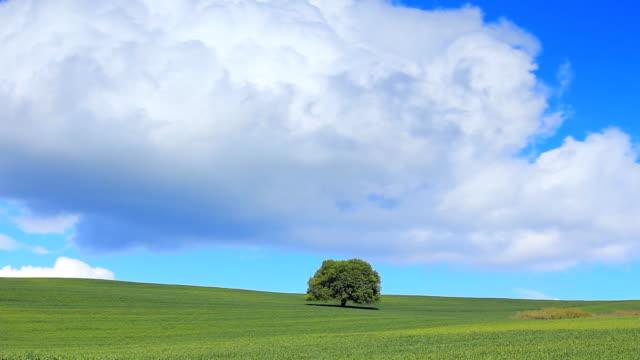 HD グリーンフィールド、lonely tree -Time Lapse (低速度撮影)