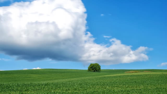 HD Green field and lonely tree - Time Lapse