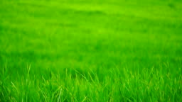 Green field background in close up view.