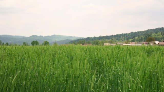 grünes feld in der landschaft von slowenija - ungarn stock-videos und b-roll-filmmaterial
