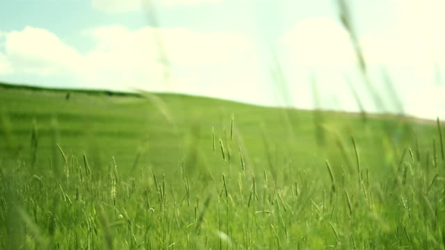 Green field in wind