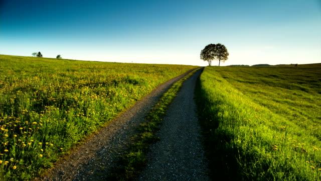 CRANE DOWN: Green Field Landscape