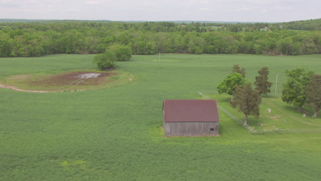 MS AERIAL Green field to mustard field with barn / Kentucky, United States