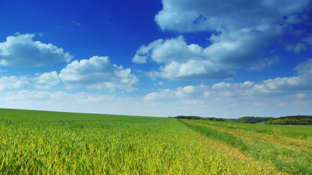 KRANICH BIS: Green Feld