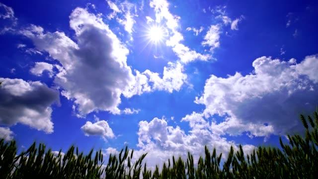 vídeos de stock, filmes e b-roll de campos verdes e o céu azul - vista de baixo para cima